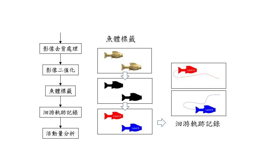 圖2、觀賞魚種魚行為辨識分析主要分析流程功能
