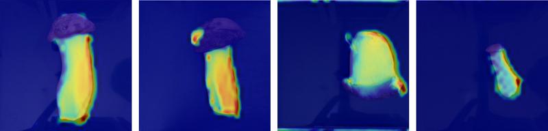 圖三、AI自動化菇類分級-深度學習關注區域視覺化。