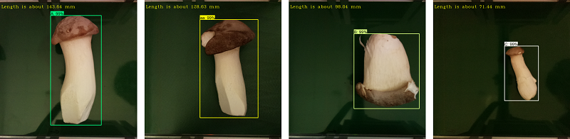 圖四、AI自動化菇類分級-目標識別與量測。