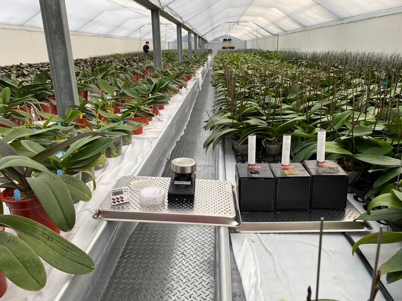 蘭花溫室微生物量測