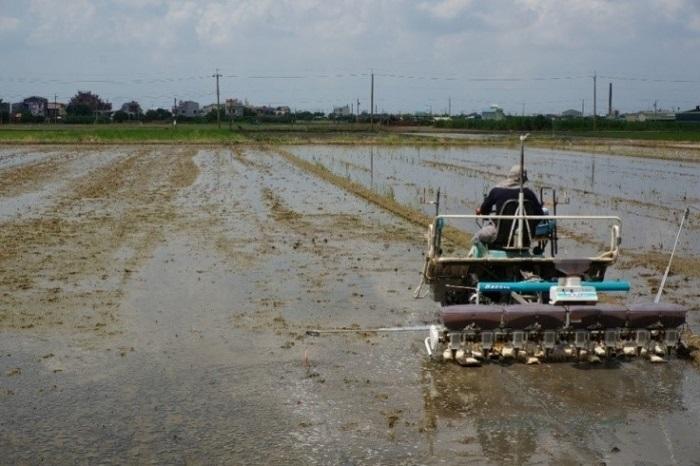 圖1、利用水稻專用湛水直播機進行播種,行株距與插秧法相近,有利於後續管理。
