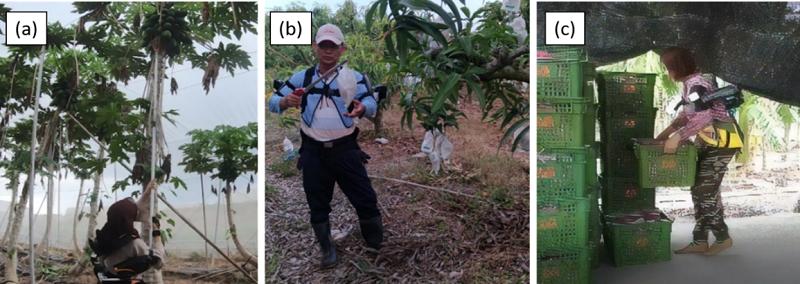 圖2、實地場域採收測試。圖(a)為木瓜園採摘實測圖;圖(b)為芒果園採摘實測採收;圖(c)為香蕉分裝場搬運實測圖。