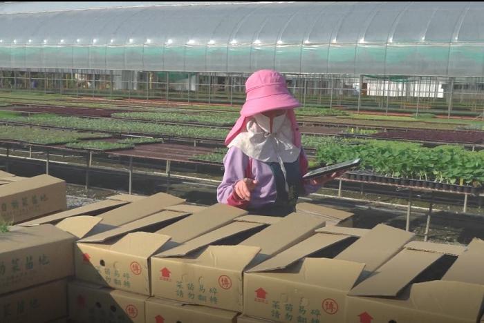 圖4、出貨盤點應用蔬菜種苗產銷資訊管理系統行動版即時記錄。