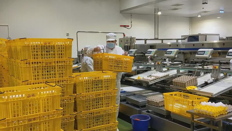 圖2、廠內員工每日需徒手搬運疊棧2噸以上的雞蛋產品