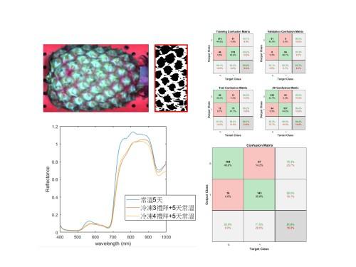 圖二、鳳梨內部褐化檢測技術,模式經冬果交叉驗證其可行性。
