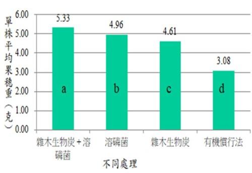 圖五、臺灣黎夏作收穫平均單株烘乾果穗調查比較