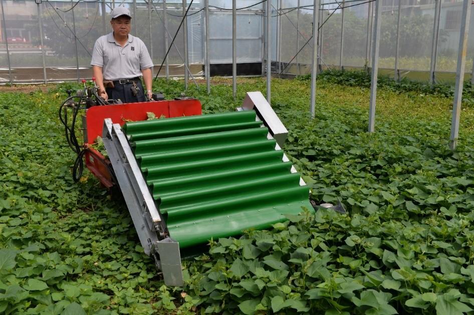 圖3、電動葉菜散裝收穫機
