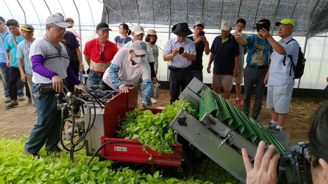 圖4、電動葉菜散裝收穫機收穫情形