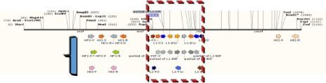 草莓炭疽病等溫PCR核酸引子設計