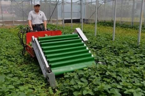 電動葉菜散裝收穫機