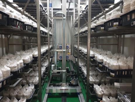 菇類智慧化自動栽培作業系統
