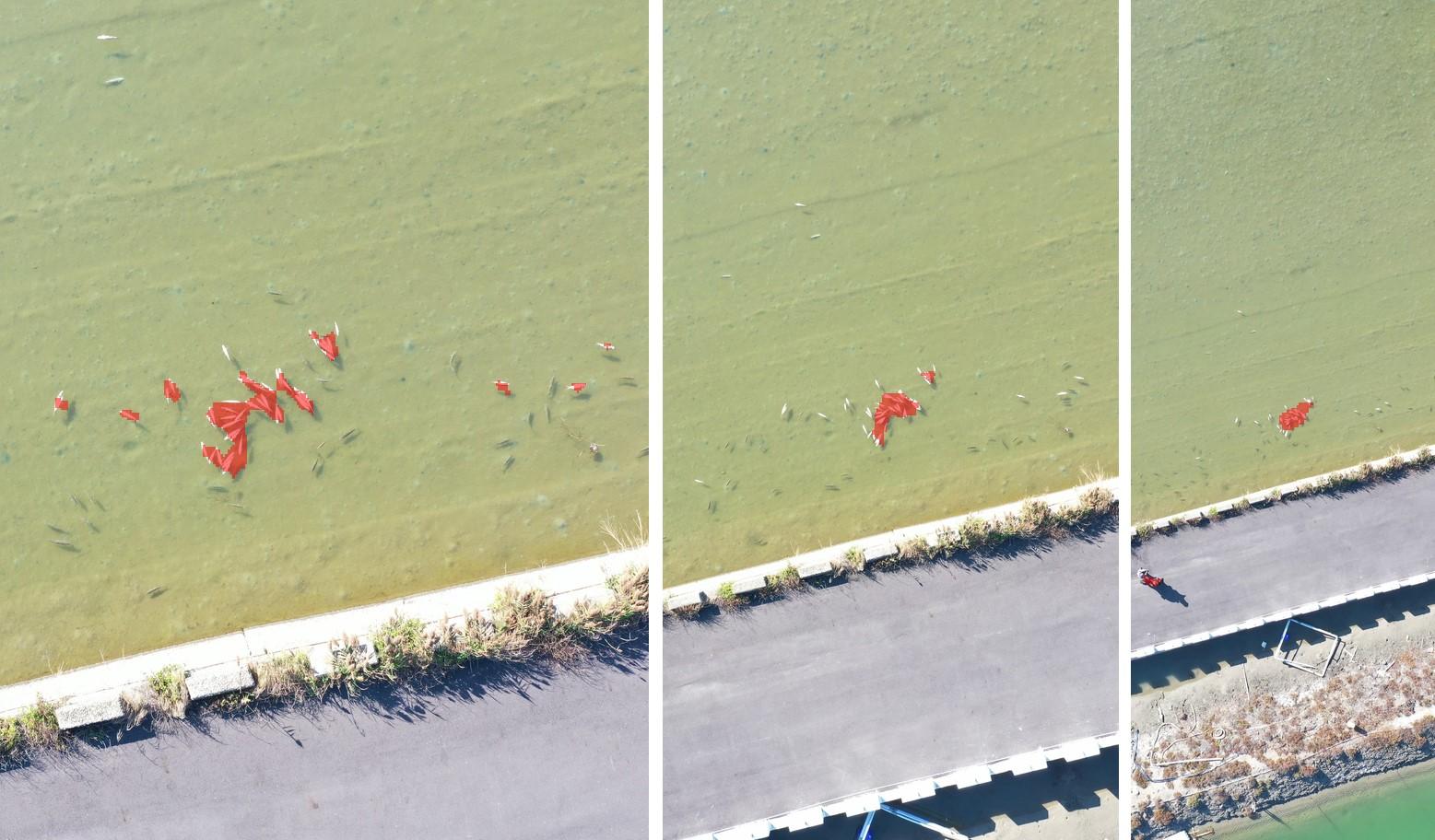 圖3、由左至右分別為18公尺、34公尺,以及64公尺航高偵測結果(紅色範圍為深度學習模型自動標記的魚體堆疊區域)