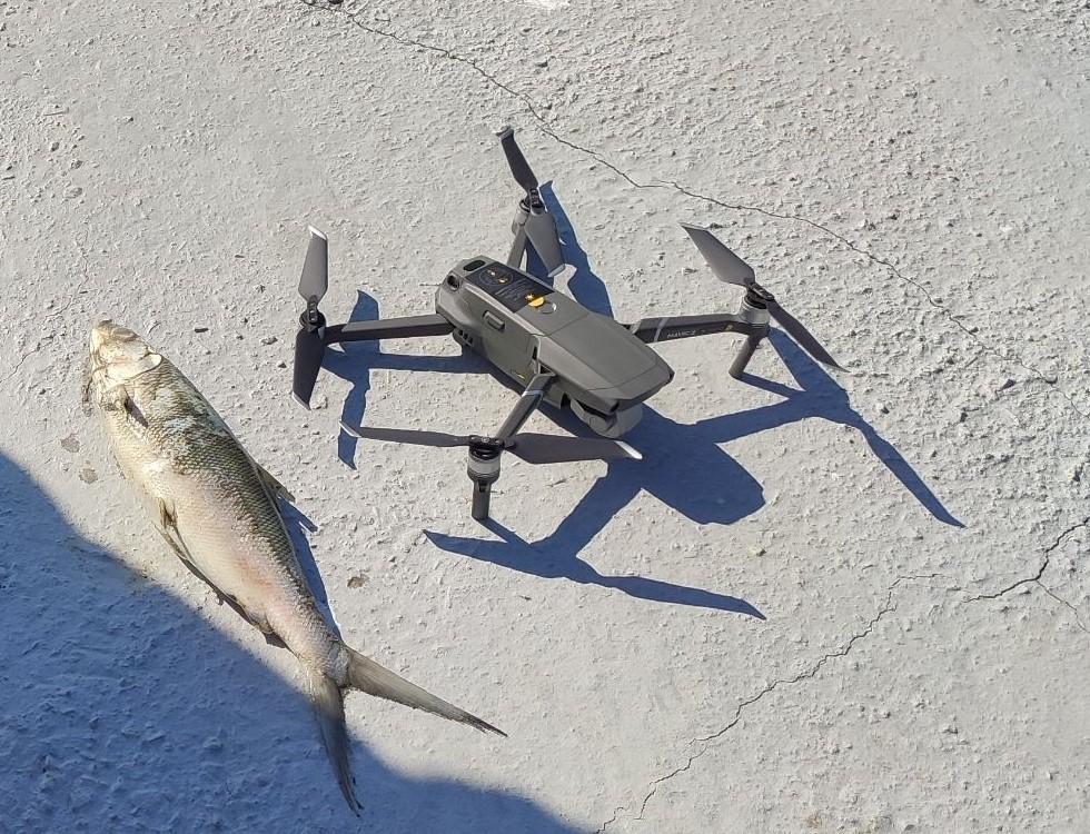 圖2、空拍機與寒害死亡的虱目魚
